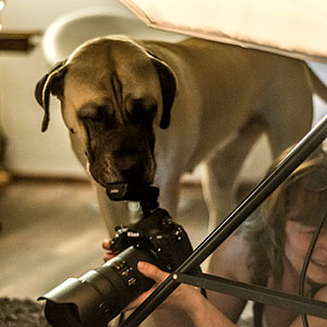 Fotosesssion mit Hund